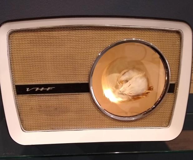 Trail - radio